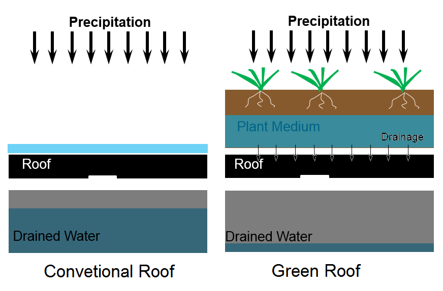 A diagram comparing a conventional roof to a green roof system in terms of stormwater runoff.